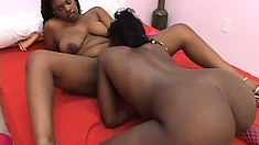 Chubby black bitch gets her hairy coochie munched by a horny ho