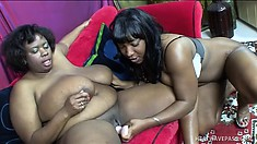 Miraculously fat ebony lesbians get down to licking business