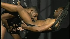 Two well hung black guys share a fuck swing to get each other off